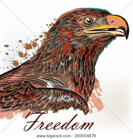 Eagle hand drawn bird illustration in engraved and watercolor style