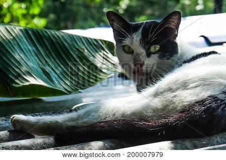 slum pet in bangkok cat man best friend