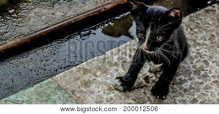 little black Stray cat looks around the street Homeless concept