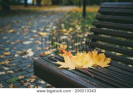 Maple leaves on the wooden bench in the park. Pathway on background. Autumn urban landscape
