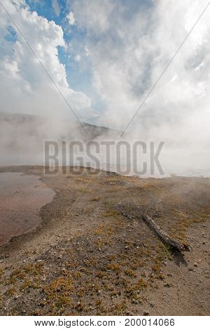 Dead log at Hot Cascades hot spring in the Lower Geyser Basin in Yellowstone National Park in Wyoming USA