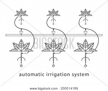 Linear illustration of the drip irrigation system.