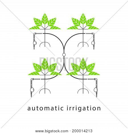 Drip irrigation system. Linear infographics. Vector illustration.
