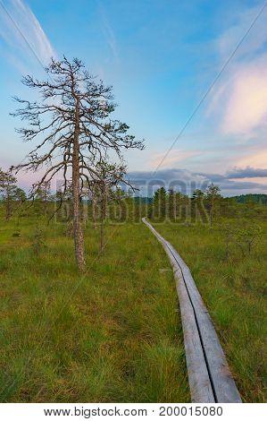 Hiking trail through bog against wonderful sunset sky. Vertical composition