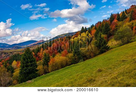 Slope With Colorful Foliage Forest