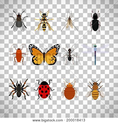 Insects icons set isolated on transparent background, vector illustration