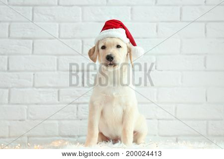 Cute dog in Santa Claus hat sitting on floor near white brick wall