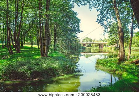 Forest in the city center in sunny clear summer weather