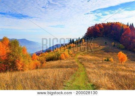 The wide trail leads to the beautiful golden forest sky with clouds on a sunny autumn day.