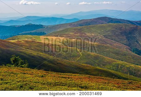 Alpine Meadows Over The Flat Mountain Ridge