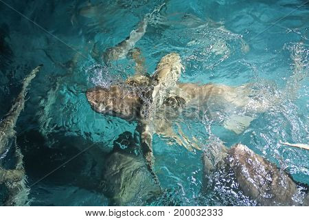 Exotic sharks at sea resort