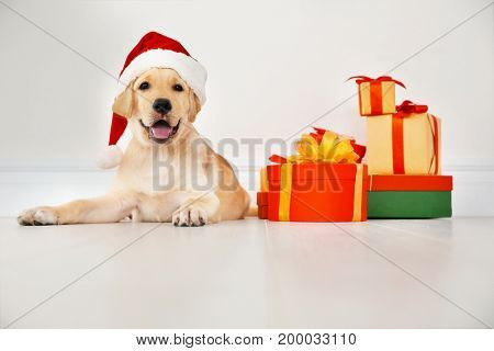 Cute dog in Santa Claus hat lying on floor near Christmas gifts