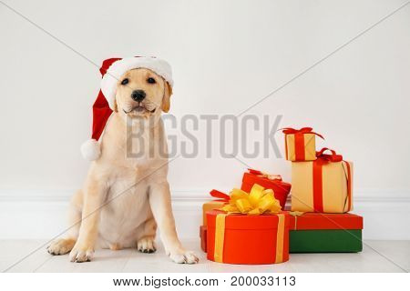 Cute dog in Santa Claus hat sitting on floor near Christmas gifts