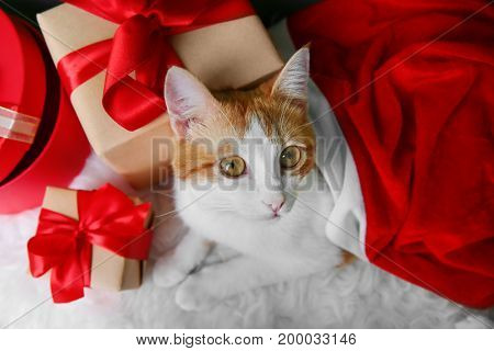 Cute cat in Santa Claus hat and gift boxes on furry carpet