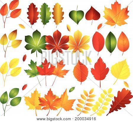 Vector illustration set of bright autumn leaves. .Fall leaves background.