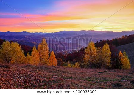 Young birch trees with yellow leaves surrounded by the mountains where autumn woods covered with fog stretched which seem to protect houses scattered on the hills under the evening sky that the setting sun colored in yellow and orange shades.