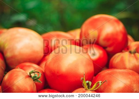 Delicious red tomatoes. A pile of tomatoes. Summer tray market agriculture farm full of organic tomatoes. Fresh tomatoes. It can be used as background.