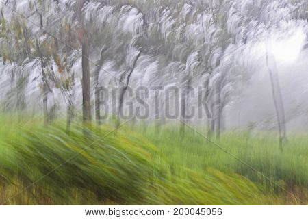 Abstract motion blur fog grass trees trunk leaves, yellow green, for design background texture