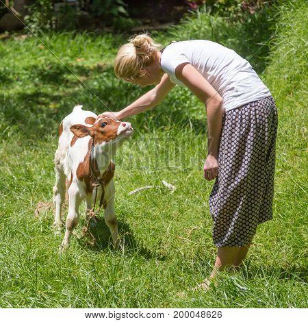 Female farmer caressing cute calf on meadow.