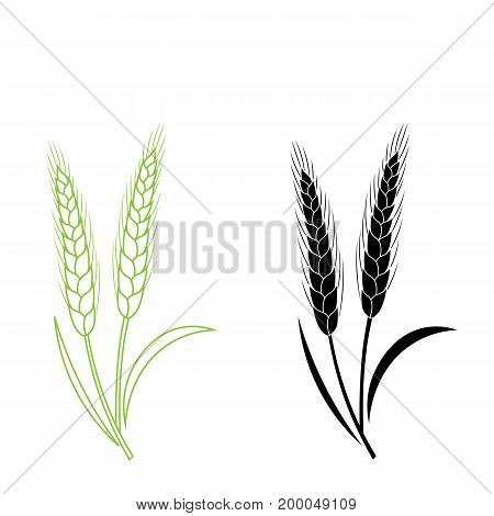 rice spike wheat food healthy natural plant organic farm field barley