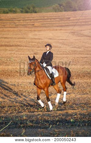 horse, active recreation, sport and equestrian concept - Young woman riding a horse. Equestrian sportswoman jockey