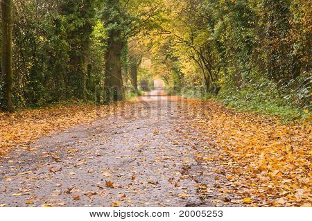Beautiful Autumn Fall Vibrant Pahtway Through Forest In English Countryside
