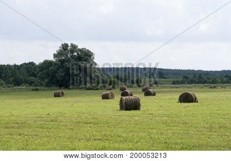 Mowing Grass In Field