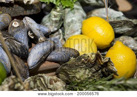 mussels oysters in shells seafood lemons food delicacy