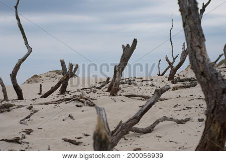Sand dunes absorbing the forest in Leba, Poland