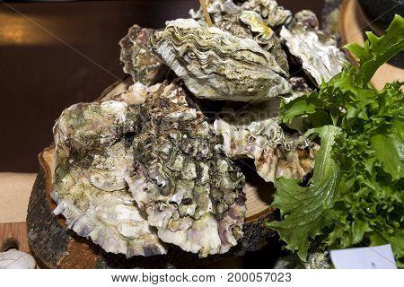 oysters clam seashells seafood lettuce leaves food