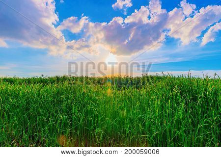 Grassland meadow with sunset and clouds in Taiwan