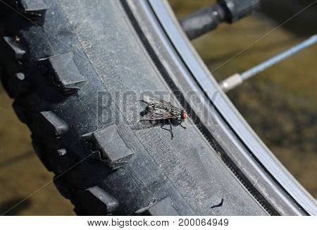 close photo of a fly basking on the tire of a bike