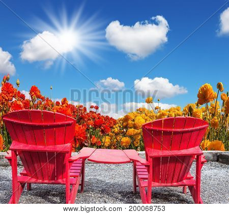 The concept of recreation and eco-tourism. The spring sun. Two joined red plastic chairs next to fields of garden buttercups