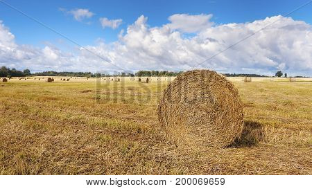 Straw bales on the field in summer day