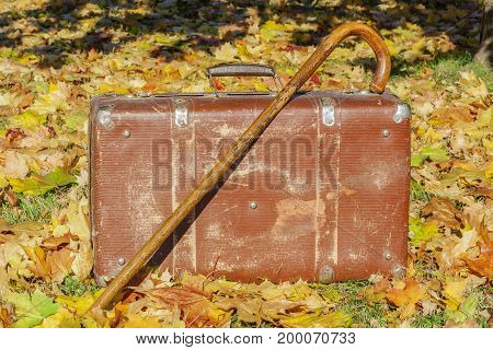 Old suitcase with walking stick on autumn leaves