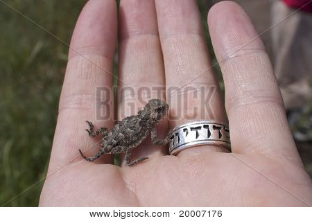 Horned Toad in Palm of Hand