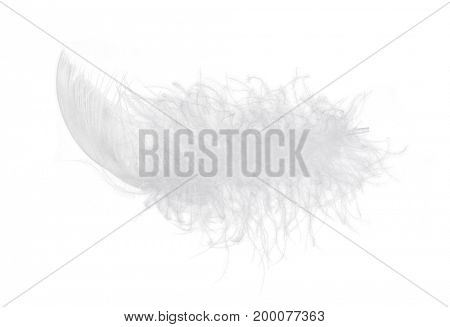 Light fluffy feather isolated on white background.