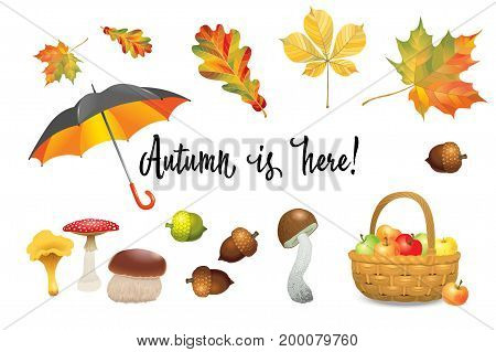 Set of autumn objects. Mushrooms umbrella apples and fall leaves. Vector illustration