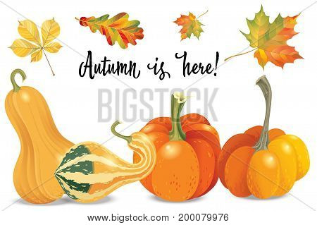 Set of autumn objects. Pumpkins different types and fall leaves. Vector illustration