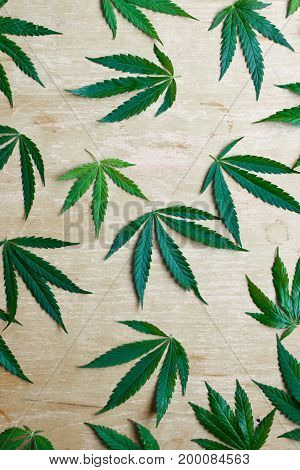 Cannabis Leaf. Hemp Is A Common Name For Cannabis Sativa And The Name Most Used When This Annual Pla