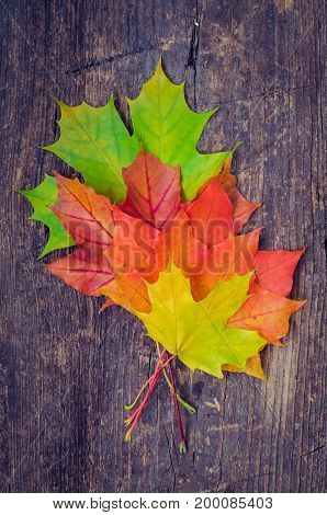 Autumn background with colorful fall maple leaves on blue rustic wooden table with place for text. Thanksgiving autumn holidays background concept. Copy space. Top view.