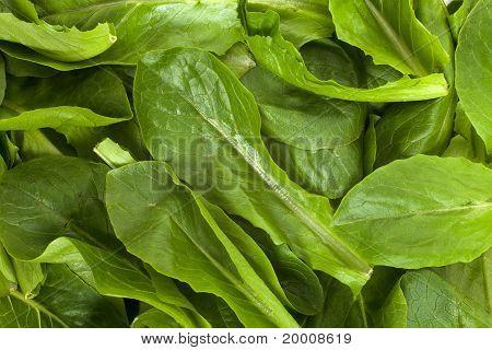 Salad Spinach