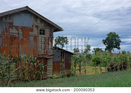 Old rusty abandoned rural house in countryside area. Grass and green corn in front.