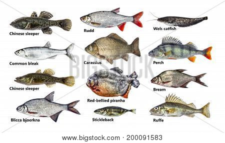 Set of many different fish, isolated, collection