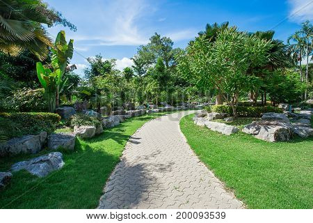 Nature green trees with rural road in quiet park in spring. park with green trees and rural road. Peaceful green park scene with natural walkway in daylight. Outdoor forest nature landscape