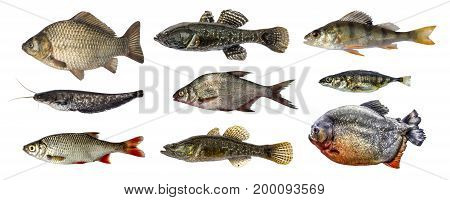 fish collection set, isolated on white background