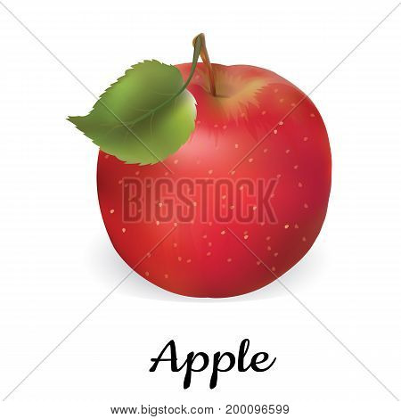 Apple red vector illustration. Isolated apple on white background