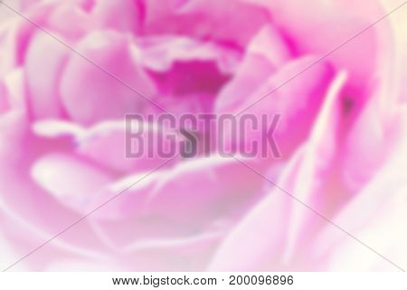 Sweet pink flower blurred background. Abstract blur.