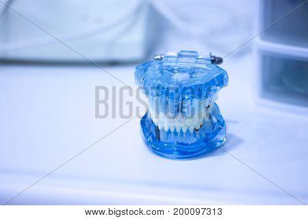Dental Office Teeth Model