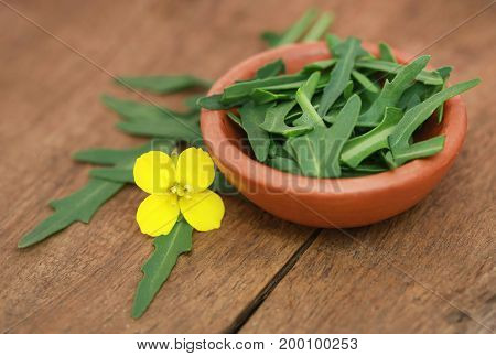 Fresh arugula or rucola leaves with flower on wooden surface